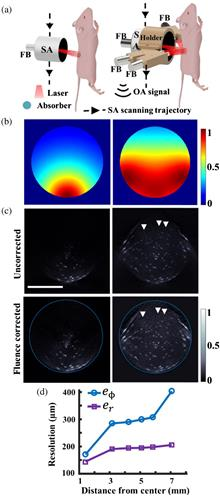 Single-sweep volumetric optoacoustic tomography of whole mice